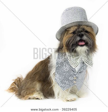 Dog In A Silver Party Outfit
