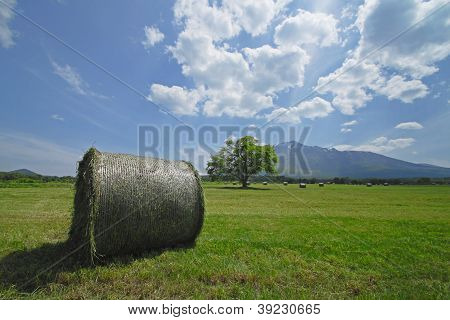 Round Bales Of Straw In The Meadow