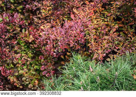 Picturesque Autumn Season, Colorful Deciduous Trees. Textured Autumn Background.