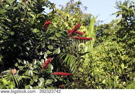 Tree In Orinoco Delta, Venezuela Tree In Orinoco Delta, Venezuela