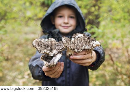 Child Is Holding Mushrooms In His Hands. Looking For Mushrooms In The Forest. Kid Holds In His Hands