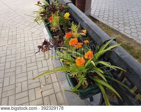 Hanging Flowerbed With Orange Flowers In The City Park Diagonal View