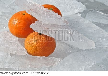 Tangerines Among The Ice Spring Day. Concept: Food Products For Long-term Storage.