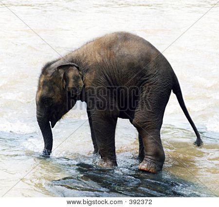 Baby Asian Elephant 2