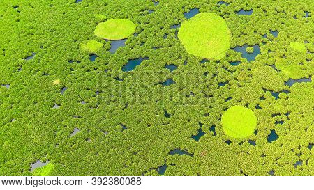 Aerial View Of Lake Baloi With Green Mangroves. Mindanao, Philippines. Tropical Landscape With Mangr