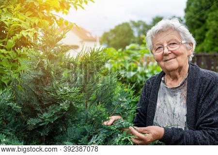 Active Senior Woman Takes Care Of Her Huge Garden, An Activity Pensioner Gardening Concept