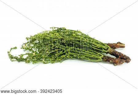 Isolated Siamese Neem Tree Or Sa Dao In The Thai Language, Image On White Background. Neem Tree Or A