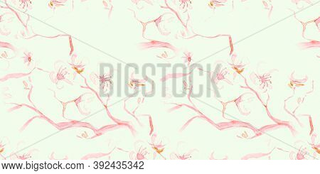 Watercolour Cherry Blossom. Seamless Sakura Background. Japan Flower Repeat. White Abstract Spring T