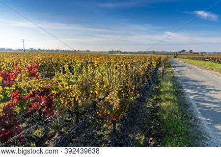 Beautiful Fall Colors In The Vineyards In Gironde Near Bordeaux