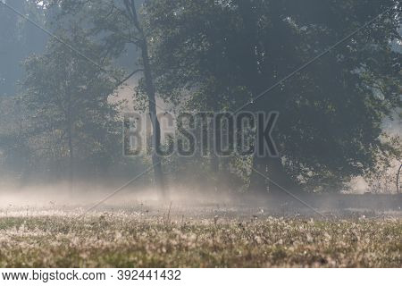 Autumn Mists Rising Over The Meadows In The Morning.\\nvast Meadow. It Is Autumn, It Is Covered With