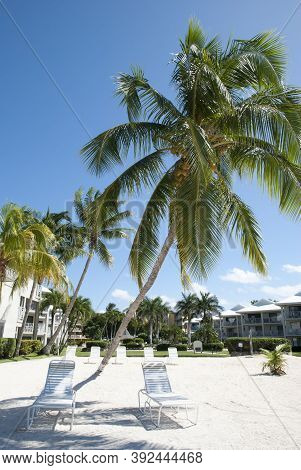 The Leaning Palm On Grand Cayman Island Seven Mile Beach (cayman Islands).