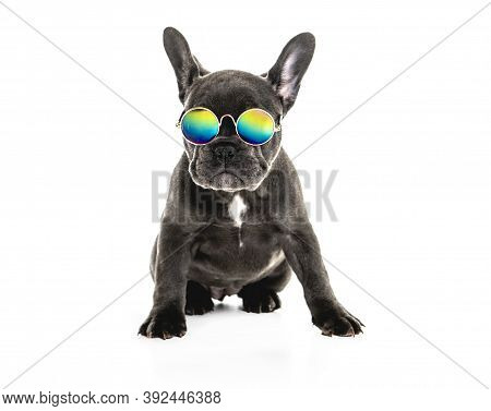 Black French Bulldog Puppy Over A White Background With Funny Glasses