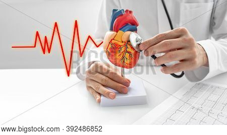 Cardiologist Use A Stethoscope For The Act Of Listening To Sounds Beat A Heart Anatomical Model. Con