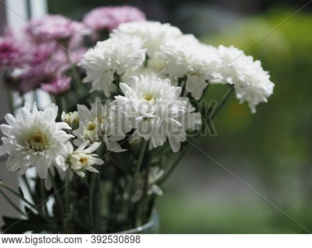 White Gerbera, Barberton Daisy Flower Beautiful Bouquet In Water Glass Colorful Beautiful