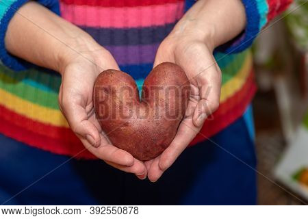 Ugly Potato In The Shape Of A Heart In Female Hands. Funny, Ugly Vegetables.