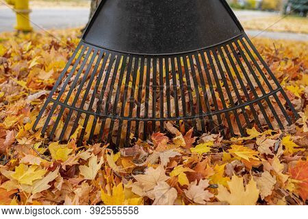 Leaf Rake With Colorful Fall Leaves Is Rady To Go To Work