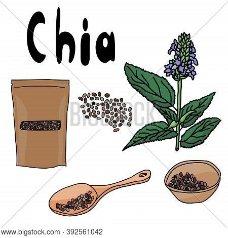 Superfood Chia Set, Seeds In A Spoon, In A Bowl, In A Package, Flowering Plant Salvia Hispanica, Hea