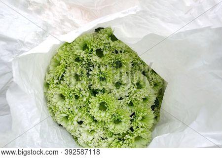 In Selective Focus Green Chrysanthemum Flower Bloosom In A White Paper Packaging