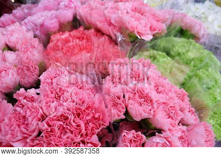 In Selective Focus Sweet Pink Carnation Flower Blossom And Selling At The Flora Market