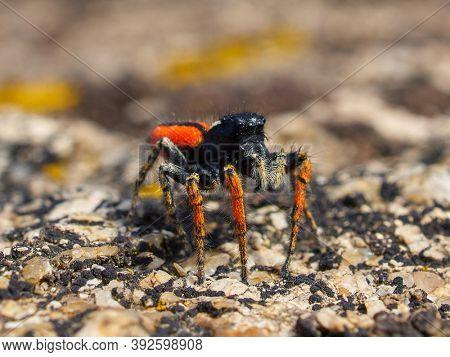 beautiful jumping spider in natural habitat
