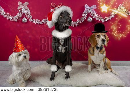 Dogs Dressed Up In A Christmas Setting, With Bow Tie Hats And Accessories