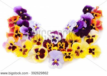 Beautiful Colorful Flowers Of Garden Pansies (viola) In Closeup.