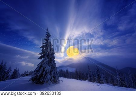 Night winter landscape with a full moon and snowy spruce in the mountains