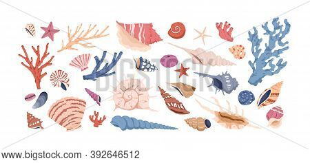 Seashells, Corals And Starfishes Collection Isolated On White Background. Marine Set With Sea Shells