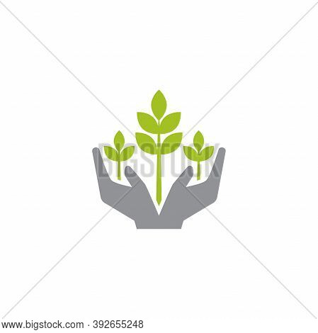 Leaves In A Hands. Hand Holding Sprigs Or Shoots. Growth, Start Up. Idea Developing.