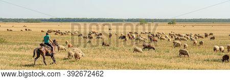 Krasnodar Region. Russia. August 17, 2020 A Herd Of Sheep Grazes In The Dry Steppe. The Shepherd Rid