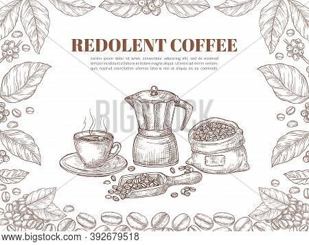Sketch Coffee Banner. Bean Leaf Ornament, Retro Plants And Branch Poster. Hot Drink Cup, Arabica Gra
