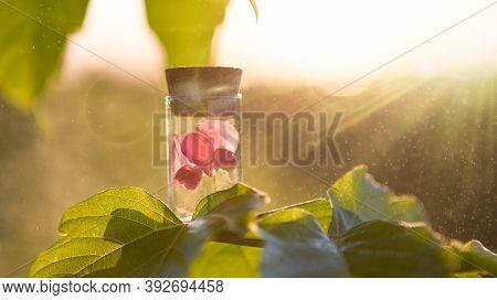 Ayurveda Alternative Medicine Spa Wellness Herbal Health Wellbeing Aromatic Aromatherapy Phytotherap