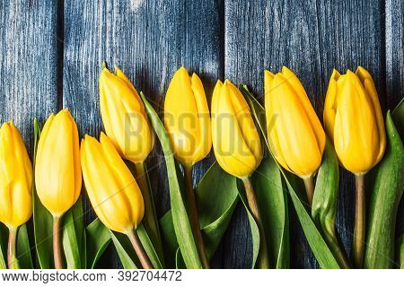 Yellow Tulips Background. Bouquet Gift For Mothers Day. Vibrant Flowers Women Day. Rustic Blue Wood
