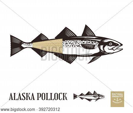 Vector Alaska Pollock Illustration