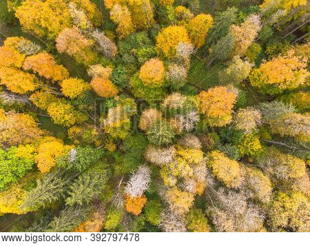 Fall Forest Landscape View From Above. Colorful Nature Background. Autumn Forest Aerial Drone View.i