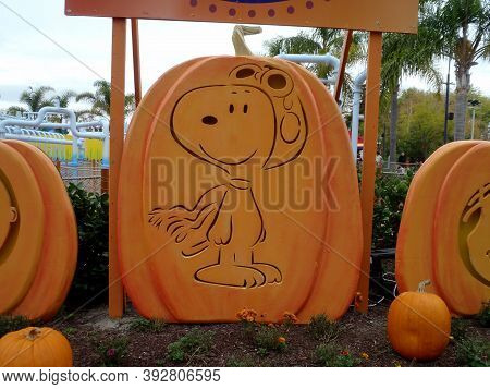 Santa Clara - October 23, 2010: Snoopy Of Charlie Brown Peanuts Pumpkin In Garden At Great America P