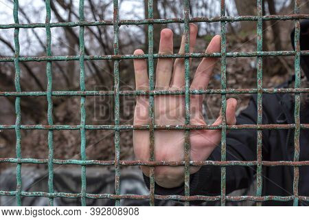 Male Hand Behind Bars Close Up. Captivity, Freedom, Prison. A Desperate Prisoner In Prison.