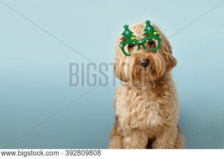 Dog with Christmas tree glasses