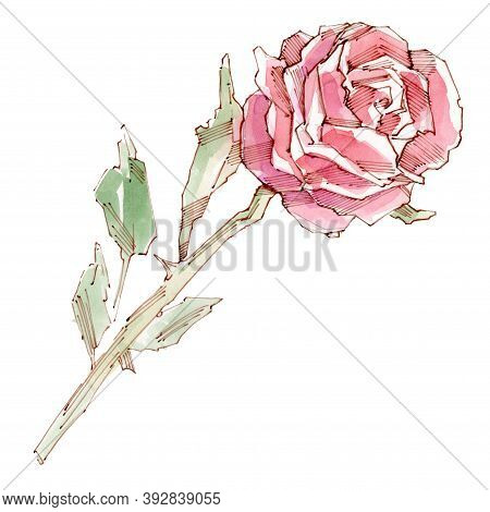 Watercolor Set Of Beautiful Red Roses. Red Rose Flower. Watercolor Illustration. Isolated