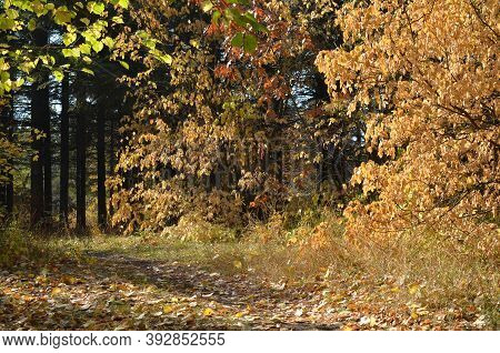 Autumn Park Landscape. Autumn Nature. Fall Landscape Scene. Colorful Autumn Landscape, Autumn Trees