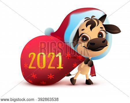 2021 Is Year Of White Bull. Funny Santa Goby Carries Bag Of Gifts. Isolated On White Vector Cartoon