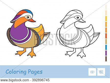 Colorful Template And Colorless Contour Image Of Mandarin Duck Isolated On White Background. Wild Bi