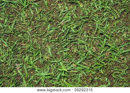 Cutted Grass Background