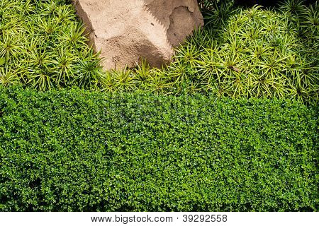 Green Grass Background With Big Stone And Bush