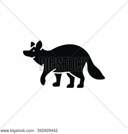 Black Solid Icon For Raccoon Omnivorous Nature Animal Jungle Wildlife Zoo