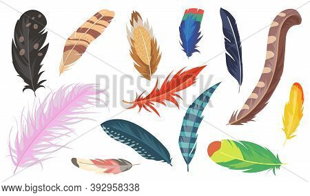 Variety Of Colorful Feathers Flat Item Set. Cartoon Shiny Ostrich, Pheasant And Parrot Isolated Vect