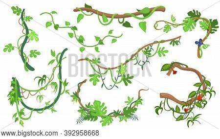 Colorful Liana Or Jungle Plant Flat Set For Web Design. Cartoon Climbing Twigs Of Tropical Vines And