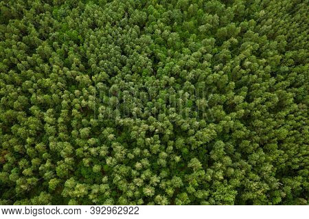 Aerial View Of Green Forest Landscape. Top View From High Attitude In Summer Evening. Natural Backdr