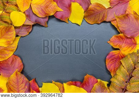 Autumn Leaves Around A Black Board For Text. Colorful Red And Yellow Background. Birch, Pear, Rowan