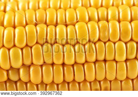 Close-up Shot Of A Part Of A Peeled Ripe Corncob. Food Background Concept.